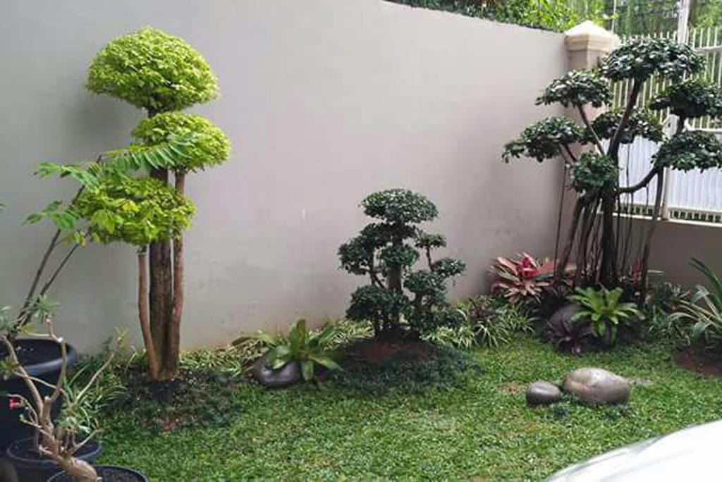 Taman minimalis dengan rumput