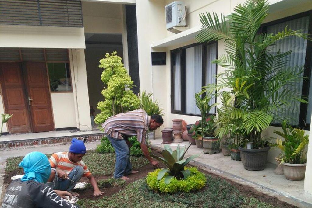 Pembuatan taman di perumahan Jogja