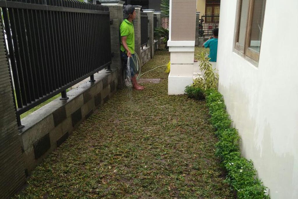 Rumput taman barokah garden